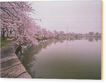 Cherry Blossoms In Fog Wood Print by Michael Donahue