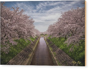 Wood Print featuring the photograph Cherry Blossoms In Nara by Rikk Flohr