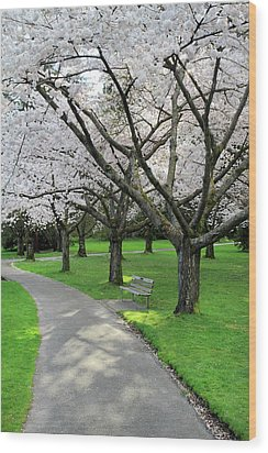 Cherry Blossoms In Stanley Park Vancouver Wood Print by Pierre Leclerc Photography