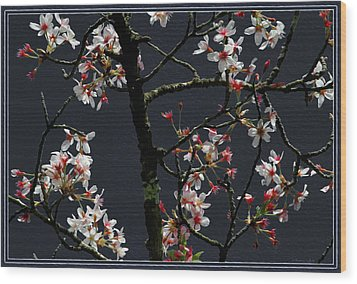 Cherry Blossoms On Dark Bkgrd Wood Print