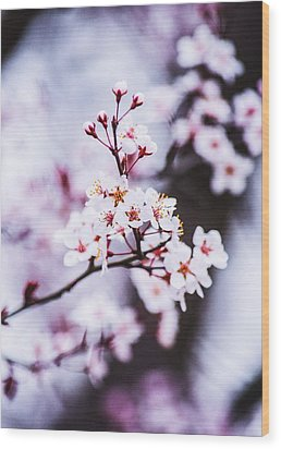 Wood Print featuring the photograph Cherry Blossoms by Parker Cunningham