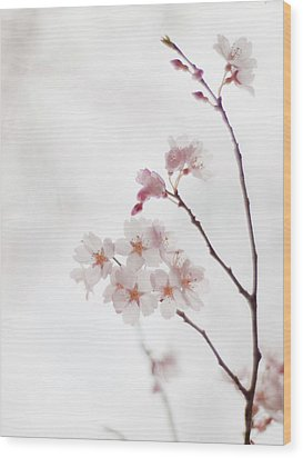 Cherry Blossoms Wood Print by Polotan