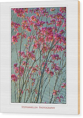 Cherry Blossoms Wood Print by Stephanie Hayes