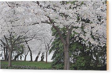 Cherry Blossoms Washington Dc Wood Print by Steve Archbold