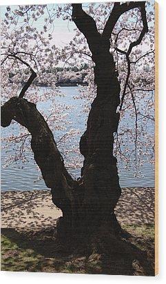 Cherry Blossoms Washington Dc Wood Print by Wayne Higgs