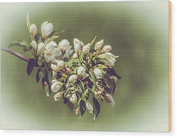 Cherry Blossoms Wood Print by Yeates Photography