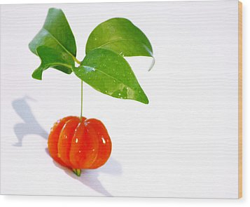 Cherry Wood Print by Holly Kempe