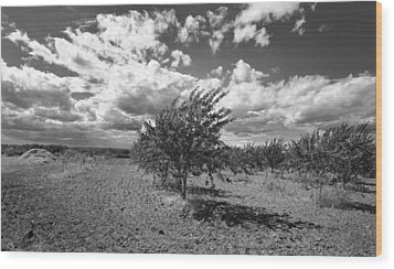 Cherry Orchard Wood Print by Stephen Mack