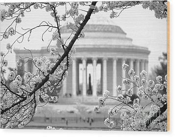 Cherry Tree And Jefferson Memorial Elegance  Wood Print by Olivier Le Queinec