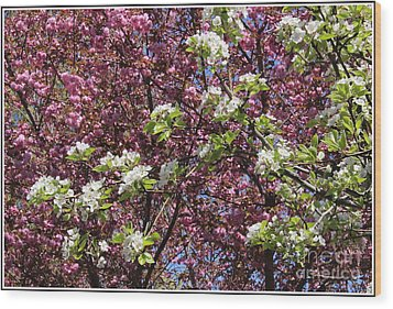 Cherry Tree And Pear Blossoms Wood Print by Dora Sofia Caputo Photographic Art and Design