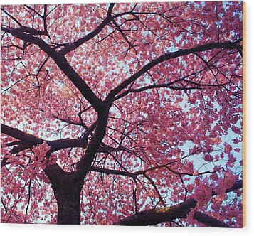 Cherry Tree Wood Print by Mitch Cat