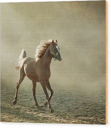 Chestnut Arabian Horse Wood Print by Christiana Stawski