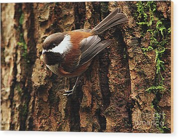 Chestnut-backed Chickadee On Tree Trunk Wood Print by Sharon Talson