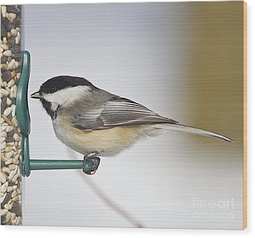 Chickadee-4 Wood Print by Robert Pearson