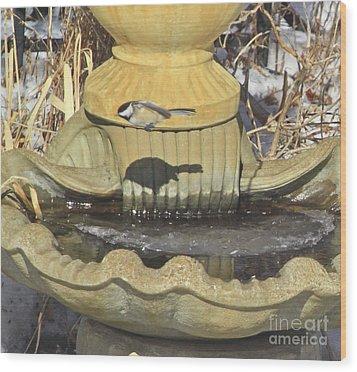 Chickadee-7 Wood Print by Robert Pearson