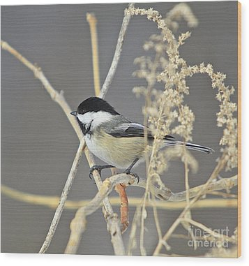 Chickadee-8 Wood Print by Robert Pearson