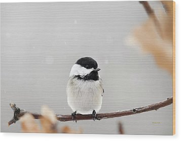 Wood Print featuring the photograph Chickadee Bird In Snow by Christina Rollo