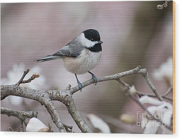 Wood Print featuring the photograph Chickadee - D010026 by Daniel Dempster