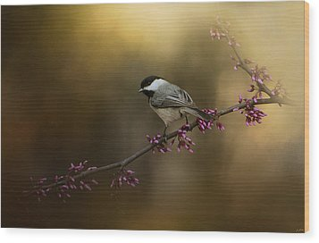 Chickadee In The Golden Light Wood Print by Jai Johnson