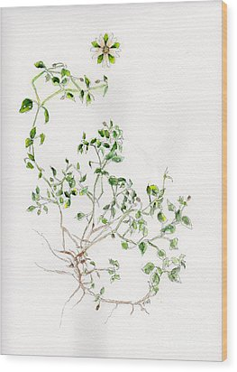 Chickweed Herb Wood Print by Doris Blessington
