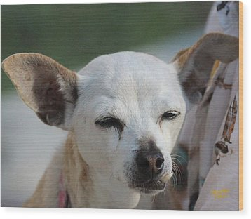 Chihuahua Snaggle Puss  Wood Print