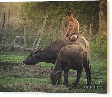 Wood Print featuring the photograph Child Riding Buffalo In Countryside Thailand. by Tosporn Preede