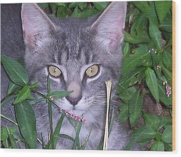 Chilling In The Garden Wood Print by Martha Hoskins