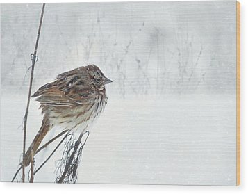 Wood Print featuring the mixed media Chilly Song Sparrow by Lori Deiter