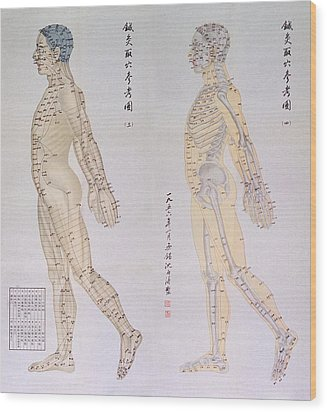 Chinese Chart Of Acupuncture Points Wood Print by Everett