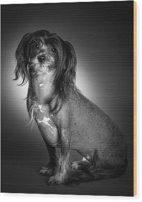 Chinese Crested - 01 Wood Print by Larry Carr