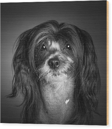 Chinese Crested - 02 Wood Print by Larry Carr