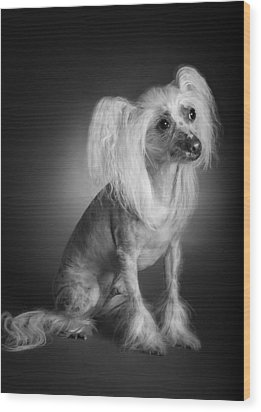 Chinese Crested - 03 Wood Print by Larry Carr