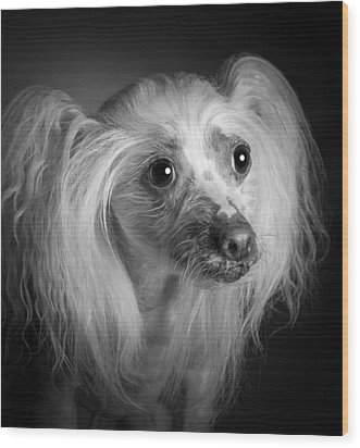 Chinese Crested - 04 Wood Print