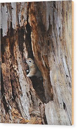 Wood Print featuring the photograph Chipmunk - Eager Arizona by Donna Greene