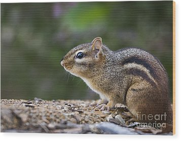 Chipmunk   Wood Print by Andrea Silies