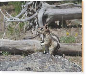 Chipmunk At Yellowstone Wood Print by Ausra Huntington nee Paulauskaite