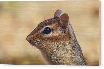 Wood Print featuring the photograph Chipmunk by Bob Orsillo