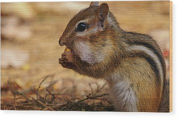 Wood Print featuring the photograph Chipmunk Eating Corn by Bob Orsillo