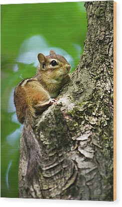 Chipmunk On A Limb Wood Print by Christina Rollo