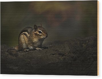 Wood Print featuring the photograph Chipmunk On Rock by Michael Cummings