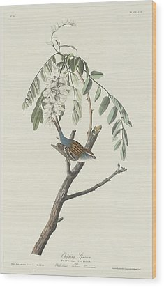 Chipping Sparrow Wood Print by Anton Oreshkin