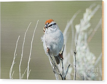 Wood Print featuring the photograph Chipping Sparrow by Mike Dawson