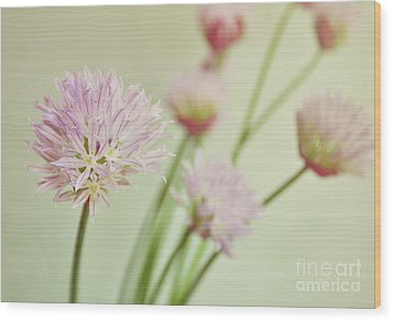 Chives In Flower Wood Print