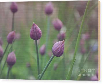 Chives Wood Print by Lyn Randle