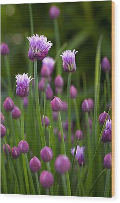 Wood Print featuring the photograph Chives by Patrick Downey