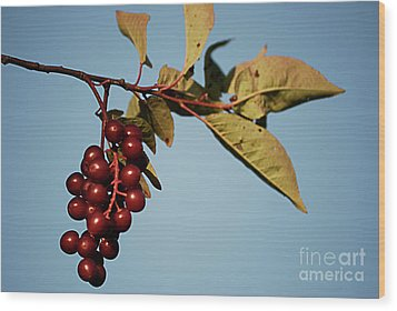 Choke Cherry Wood Print by Randy Bodkins