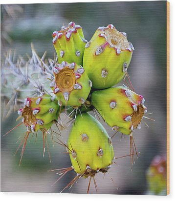 Wood Print featuring the photograph Cholla Fruit S48 by Mark Myhaver