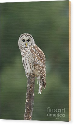 Chouette Perchee. Wood Print