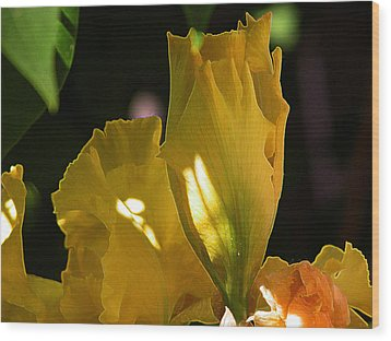 Wood Print featuring the digital art Yellow Iris by Stuart Turnbull