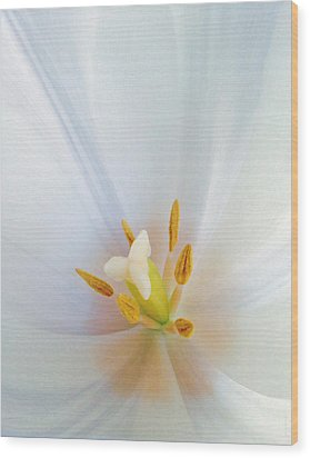Wood Print featuring the photograph Christened Tulip by Gwyn Newcombe